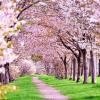 少しずつ桜咲いてますね。お花は来週くらいか?